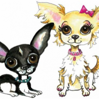 Chihuahua siblings Harry and Bella